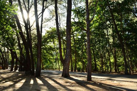 arbor: tree, plant, wood, woods, arbour, arbor Stock Photo
