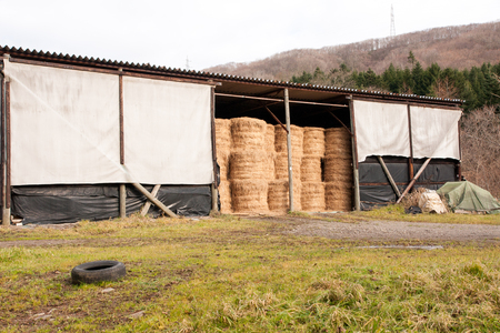 stored: Hay is stored in the barn