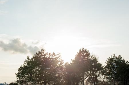 backlit: Trees and backlit