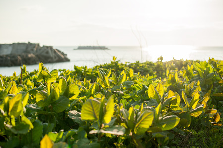 weed block: Plants growing on the beach Stock Photo