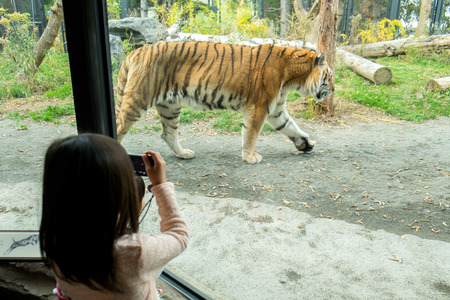 zoo: Zoo