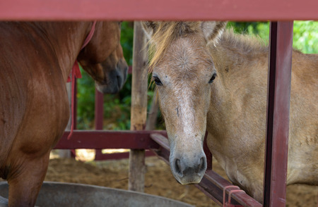 horse pull: Brown horse in a stall In the garden of Agriculture Stock Photo
