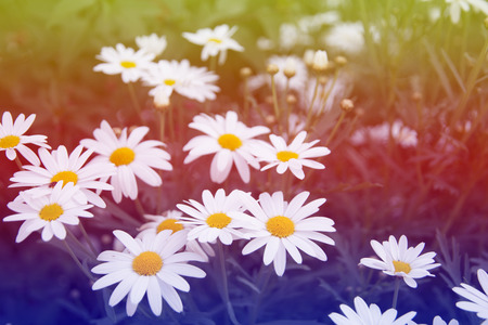 nicely: Flowers that grow naturally along nicely in Thailand. Stock Photo