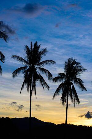 hintergrund himmel: Schatten-B�ume Hintergrund Himmel bei Sonnenuntergang. Lizenzfreie Bilder
