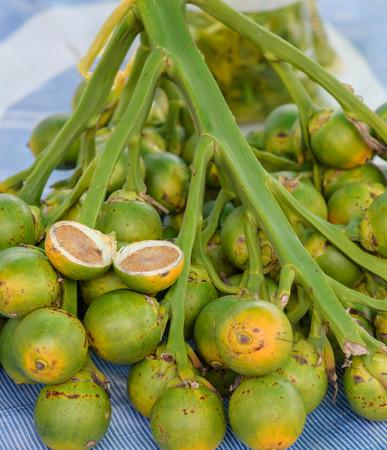 betel: Betel Nuts.A medicinal plant species