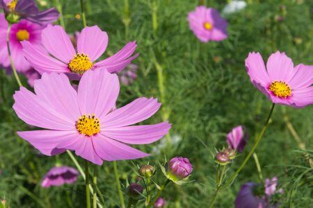 surroundings: Flower beautiful natural surroundings
