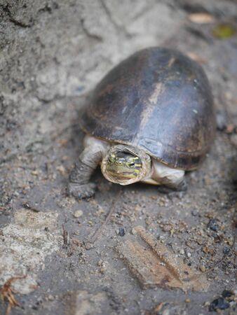 격리 된 거북이 바위 바닥에 산책