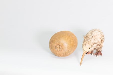 living being: Kiwifruit and kiwi Stock Photo