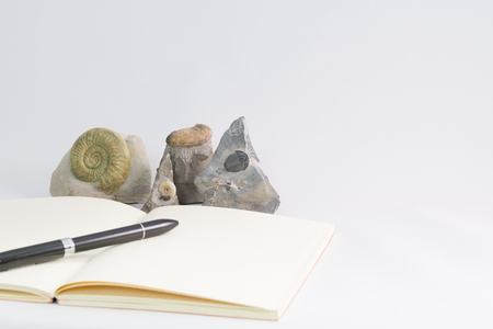 fossils: Fossils and notebook Stock Photo