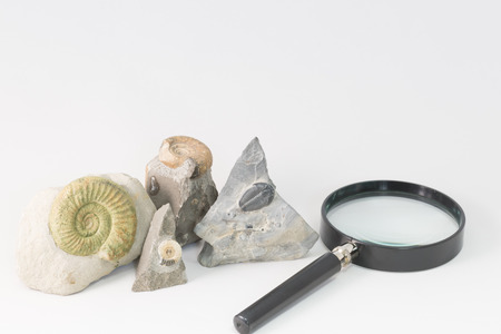 Fossils and loupe