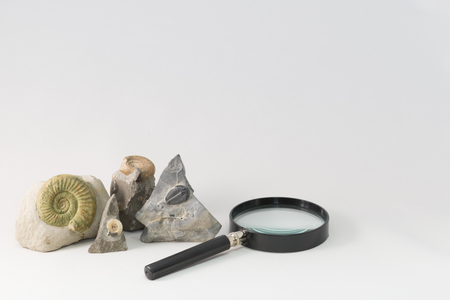 fossils: Fossils and loupe