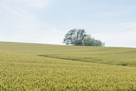 exhilarating: Hill of the wheat field