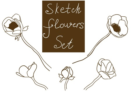 anemones: Flower set detailed hand drawn anemones. Vector sketch collection.