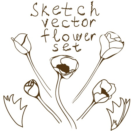 anemones: Flower set: detailed hand drawn anemones. Vector sketch collection.