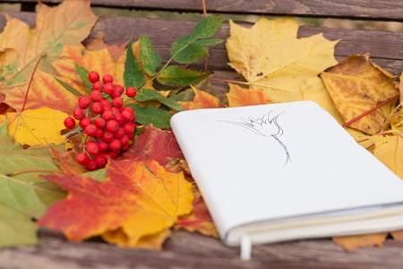 Old notepad with drawing and rowan in autumn leaves on wooden bench