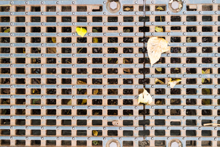 Texture of metal mesh with autumn leaves