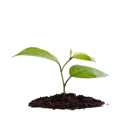 to thrive: Young green plant on a white background Stock Photo