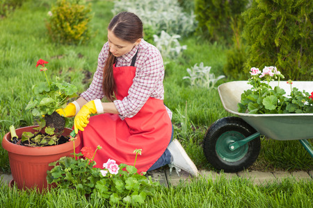 Young woman planting flowers in pot with dirt or soil. Gardening