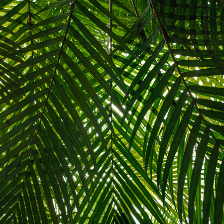 Creative tropical green leaves layout.