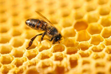 Working bee on honeycomb Banco de Imagens