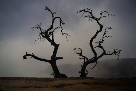 Silhouette dead tree at night for Halloween background. Stock Photo