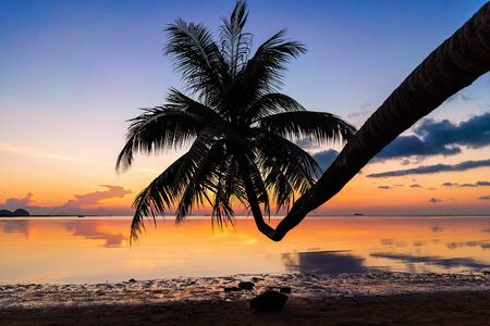 Sunset over the ocean with tropical palm tree silhouette