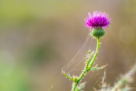 A spike with a flower in a forest in a web. Macro Stockfoto