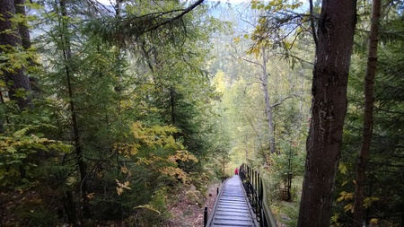 backwoods: Stairs in the middle of a forest