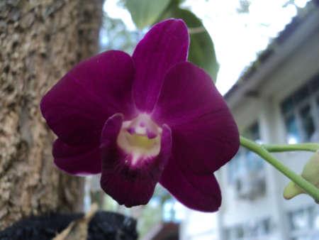 noun: Purple orchids