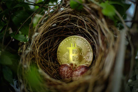 Gold bitcoin and red eggs inside the birds nest on the tree, The investment is risky.