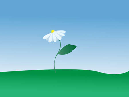 daisy growing in the meadow Illustration