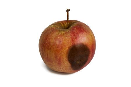 spoilt: one spoilt slightly apple on a white background
