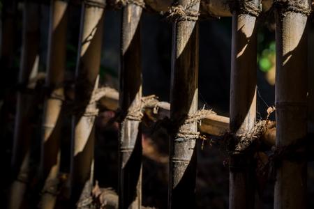 竹の柵 写真素材