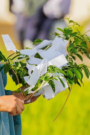 plants called Saakaki in Shitoism, japan