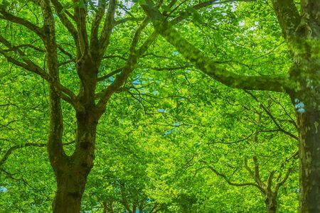 fresh green leaves in summer