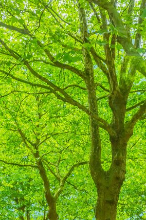 fresh green leaves in summer Banque d'images - 132119557