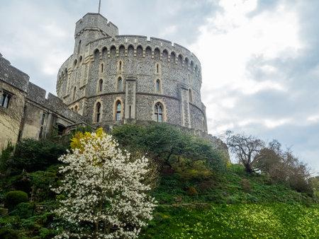 windsor castle with tree, london, uk 報道画像