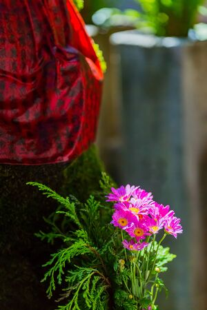 bellflower, purple flower in garden