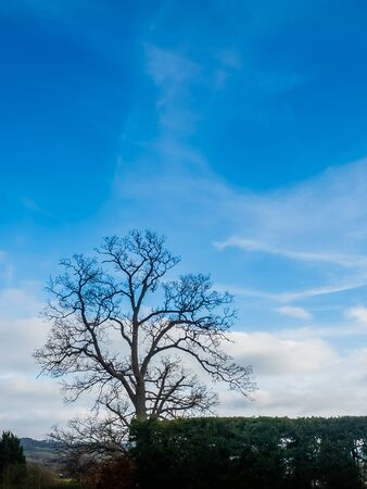 big tree and blue sky with white clouds