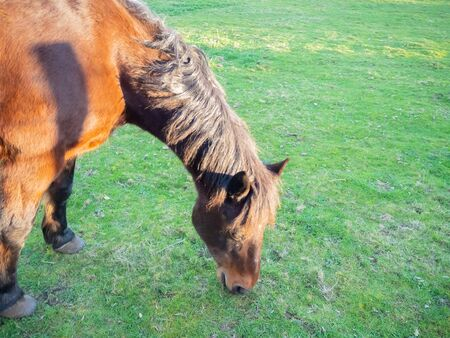 red horse grazing in meadow