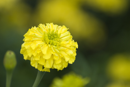 A yellow flower. Stok Fotoğraf