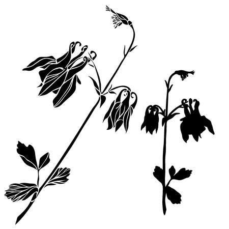 Beautiful botanical vector with flowers watershed. Black silhouettes on white background.