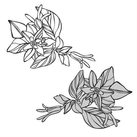 Vector design with flower loach. Elements isolated on white background. In black and white style. Can be used for printing on paper, stickers, badges, bijouterie, tattoo.