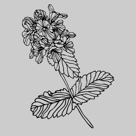 Isolated design of decorative delphinium flowers in black and white style on a grey background. The design is perfect for clothes and decorations design, stickers, tattoos.