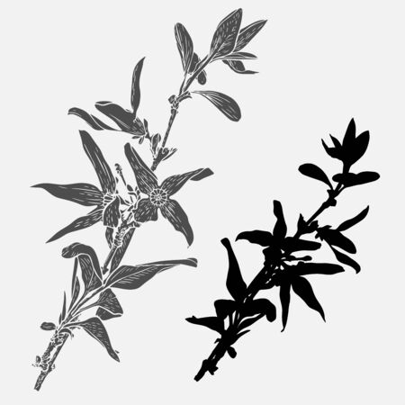 Forsythia flowers on a branch. Vector design In black and white style. Elements isolated on background.Can be used for printing on paper, stickers, badges, bijouterie, cards, textiles, tattoos.