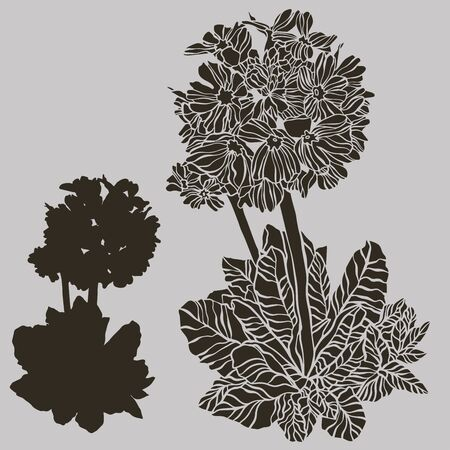Vector botanical illustration with flower primula . Vector design In black and white style. Elements isolated on background.Can be used for printing on paper, stickers, badges, bijouterie, cards, textiles, tattoos.