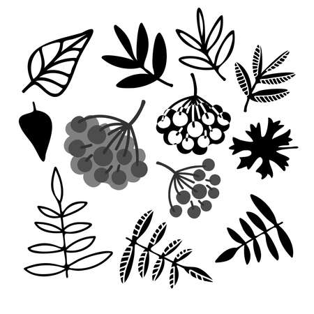 Black and white design of forest leaves and berries