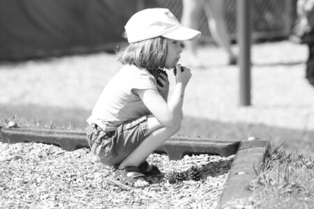 針葉樹の円錐形を集める少女