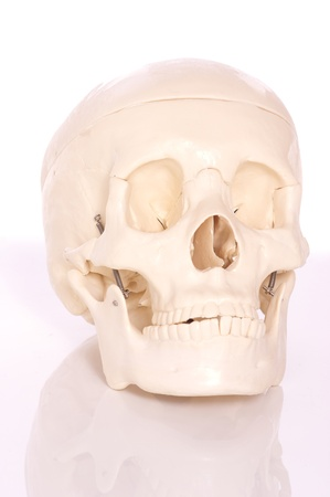 brainpan: Medical learning skull laying on a white background