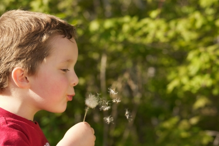 Little boy playing with a dandelion